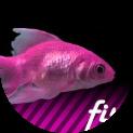FiszPL